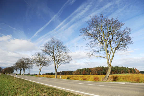 Autumn lanscape Stock photo © manfredxy