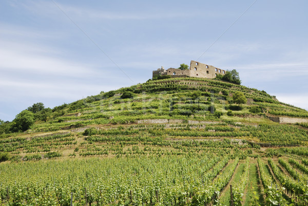 Castle on a vineyard Stock photo © manfredxy