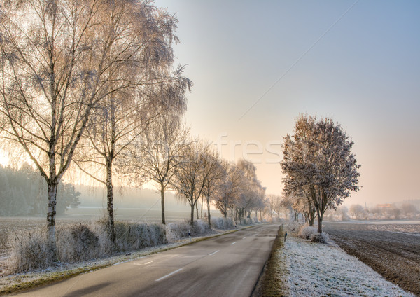 Country road in a winter landscape with frosted trees Stock photo © manfredxy