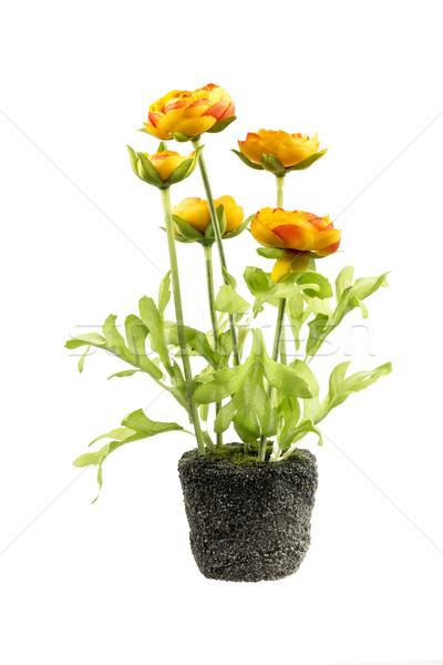 人工的な 花 土壌 春 プラスチック 花弁 ストックフォト © manfredxy