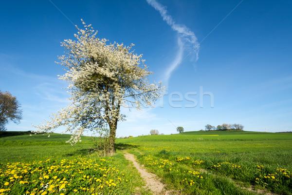 Manzara çiçekli ağaç bahar çiçekler yol Stok fotoğraf © manfredxy