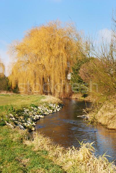 Fűzfa folyó égbolt víz természet magányos Stock fotó © manfredxy