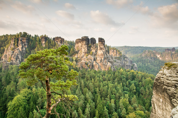 Sandstone Mountains in Saxony Stock photo © manfredxy