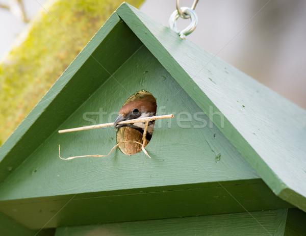 ツリー スズメ 緑 木製 ストックフォト © manfredxy
