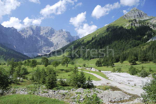 Summer in the alps Stock photo © manfredxy