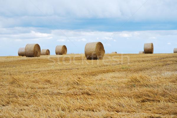 соломы пейзаж небе природы пшеницы стране Сток-фото © manfredxy