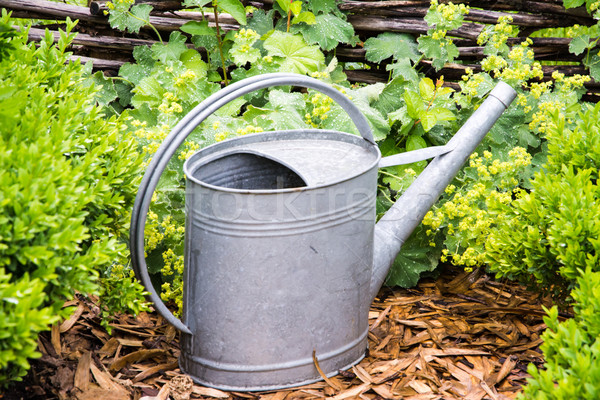 Vintage regador jardim retro aço jardinagem Foto stock © manfredxy