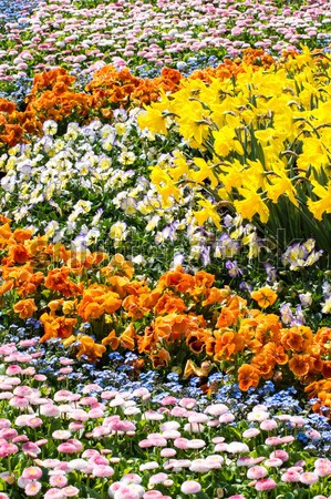 Gorgeous spring flowers Stock photo © manfredxy