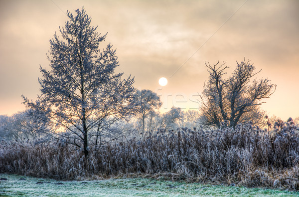Sunset on a foggy winter day with frosted trees Stock photo © manfredxy
