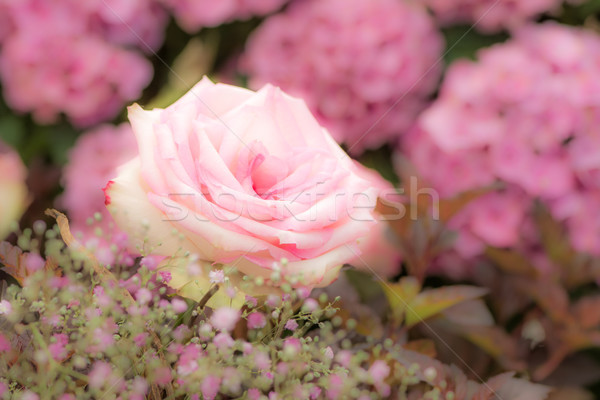 Flower deco with pink roses Stock photo © manfredxy
