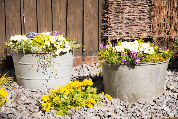 Vintage tin buckets filled with spring flowers Stock photo © manfredxy