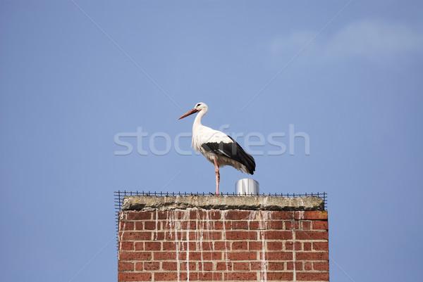 Stork Stock photo © manfredxy