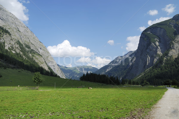 Mountain pasture in Tirol Stock photo © manfredxy