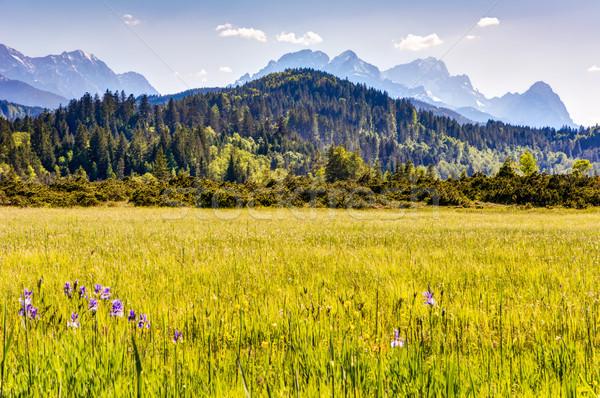 цветения луговой Альпы гор древесины лес Сток-фото © manfredxy