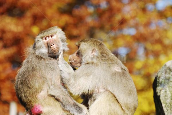 Dois comprometido mútuo família natureza animal Foto stock © manfredxy