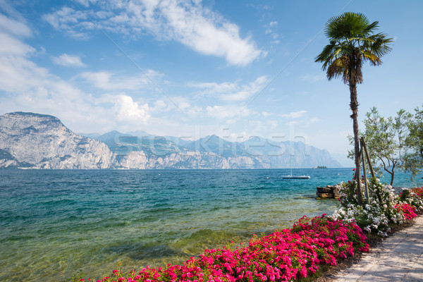 Flowers at Lake Garda Stock photo © manfredxy