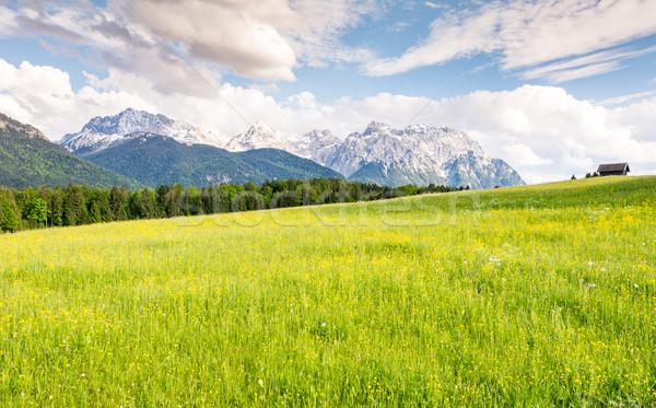 пастбище Альпы гор горные луговой Германия Сток-фото © manfredxy