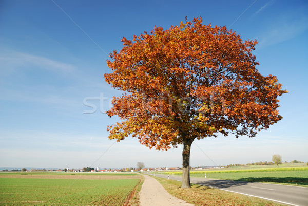 Autumn Landscape Stock photo © manfredxy