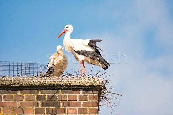 белый аистов пару гнезда дымоход здании Сток-фото © manfredxy