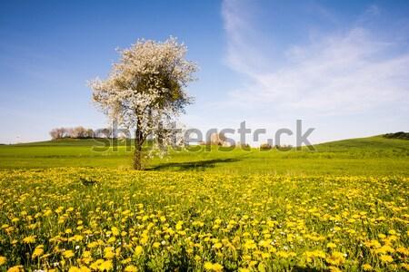 Manzara çiçekli ağaç bahar çiçekler çayır Stok fotoğraf © manfredxy