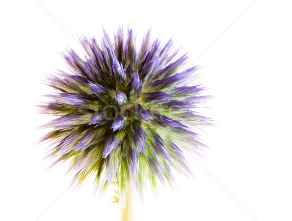 Streszczenie kwiat makro niebieski Zdjęcia stock © manfredxy