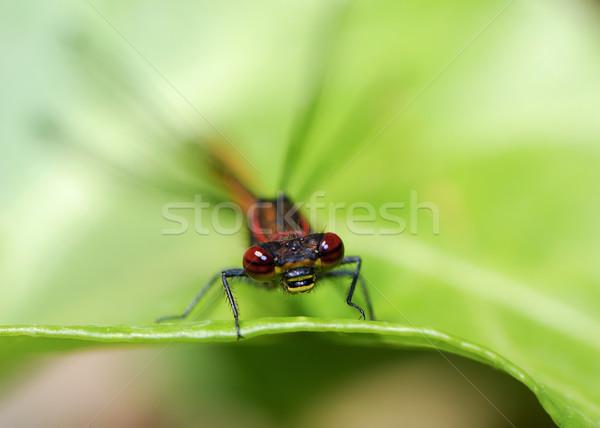 Stock photo: Dragonfly
