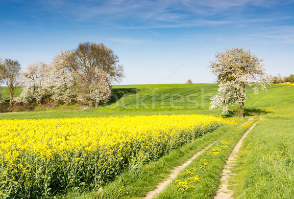 Stock photo: Landscape with a flowering tree