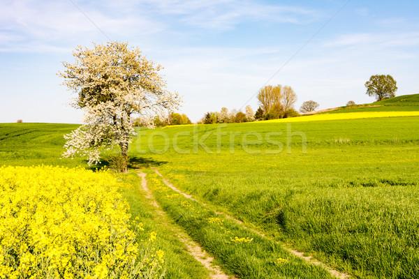 пейзаж цветения дерево весны трава области Сток-фото © manfredxy