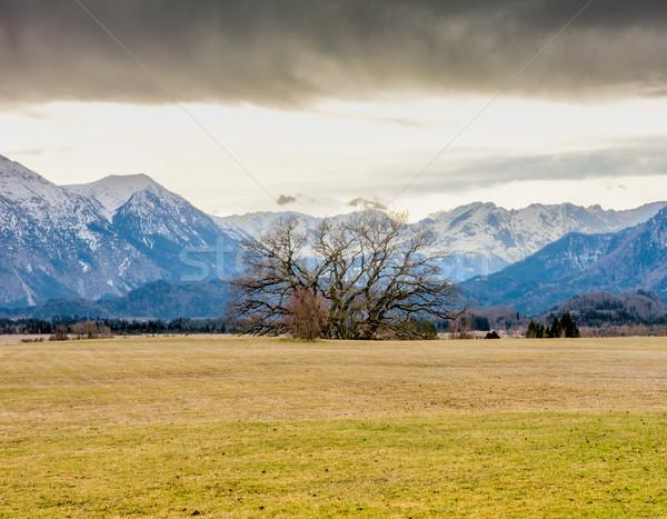 Murnauer Moos bog in Bavaria Stock photo © manfredxy