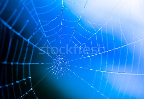 クローズアップ ぬれた クモの巣 露 値下がり 抽象的な ストックフォト © manfredxy