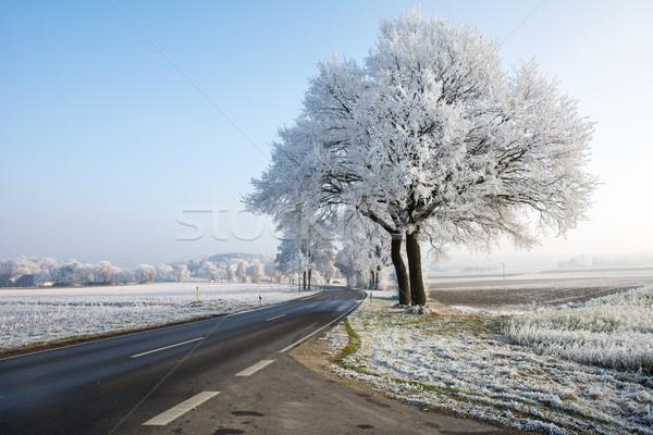 Estrada rural inverno paisagem árvores estrada natureza Foto stock © manfredxy