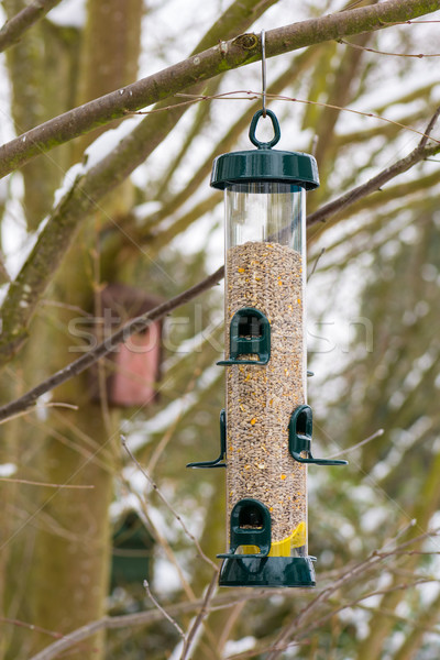 Bird Feeder hanging on a tree Stock photo © manfredxy
