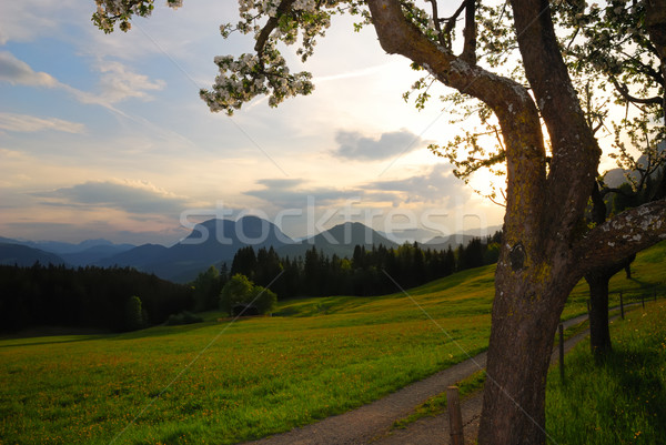 Sunset in the alps Stock photo © manfredxy