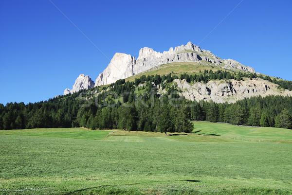 Alpesi legelő fa természet tájkép fák Stock fotó © manfredxy