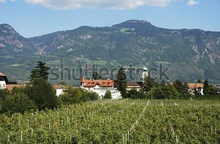 Stockfoto: Appel · plantage · zuiden · voedsel · natuur · landschap