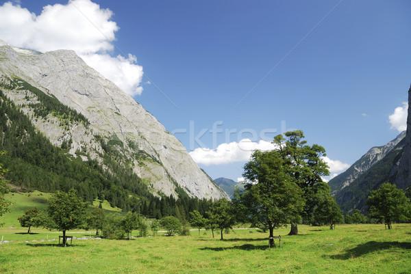 Alpine maple trees Stock photo © manfredxy