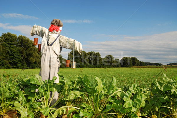 Scarecrow Stock photo © manfredxy