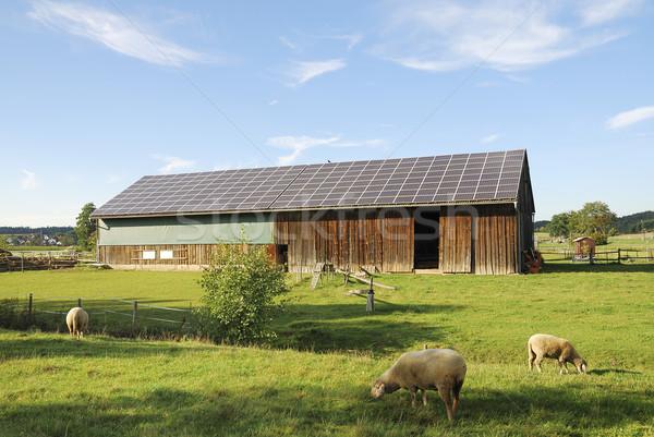 Fotovoltaikus öreg csőr tető birka vidék Stock fotó © manfredxy