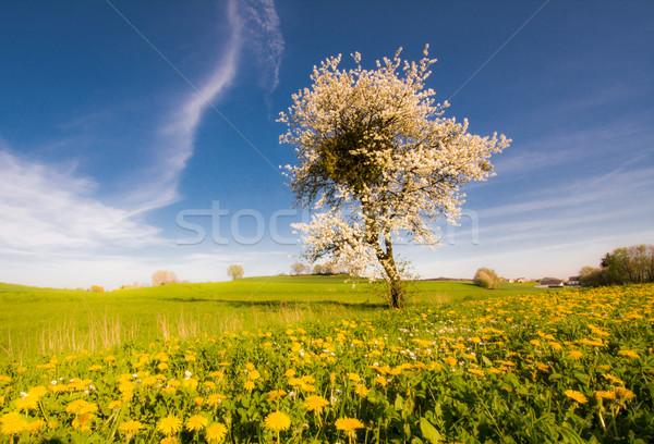 пейзаж цветения дерево весны цветы луговой Сток-фото © manfredxy