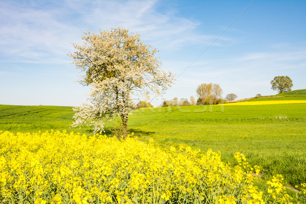 Landschap bloei boom voorjaar gras landbouw Stockfoto © manfredxy