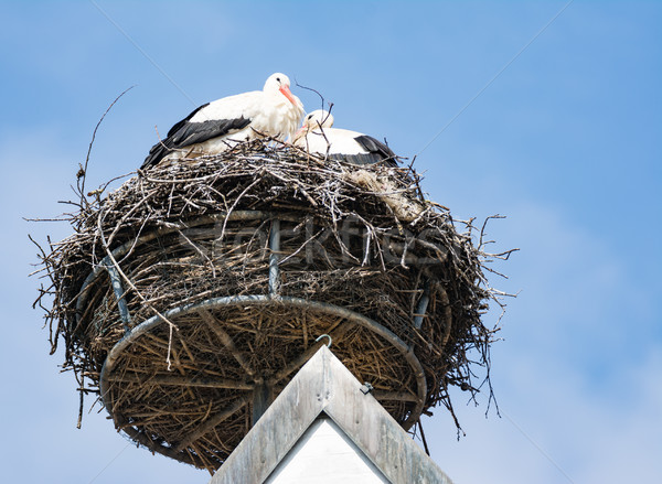 White storks in their nest Stock photo © manfredxy