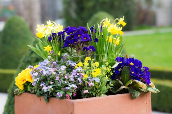 Rechthoekig bloempot park bloemen voorjaar natuur Stockfoto © manfredxy