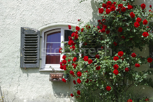 Window and roses Stock photo © manfredxy