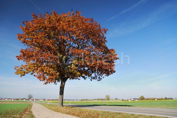 Stok fotoğraf: Sonbahar · manzara · ağaç · doğa · sokak · mavi