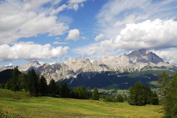 Alpine weide boom natuur landschap bomen Stockfoto © manfredxy