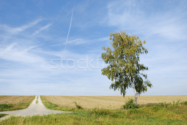 Lonely dirt track Stock photo © manfredxy