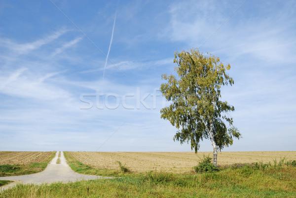 Eenzaam vuil track hemel Blauw Stockfoto © manfredxy