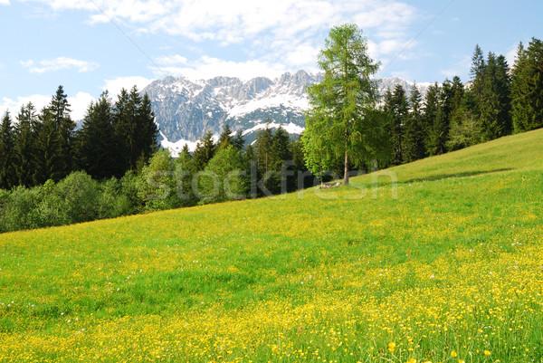 Stockfoto: Bergen · alpen · Oostenrijk · bloemen · hout · bos