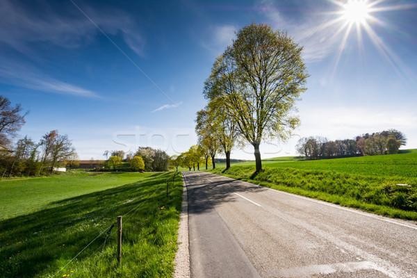 Fák vidéki út tájkép fa nap aszfalt Stock fotó © manfredxy
