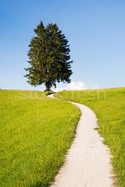 Hiking path at a lonely tree Stock photo © manfredxy